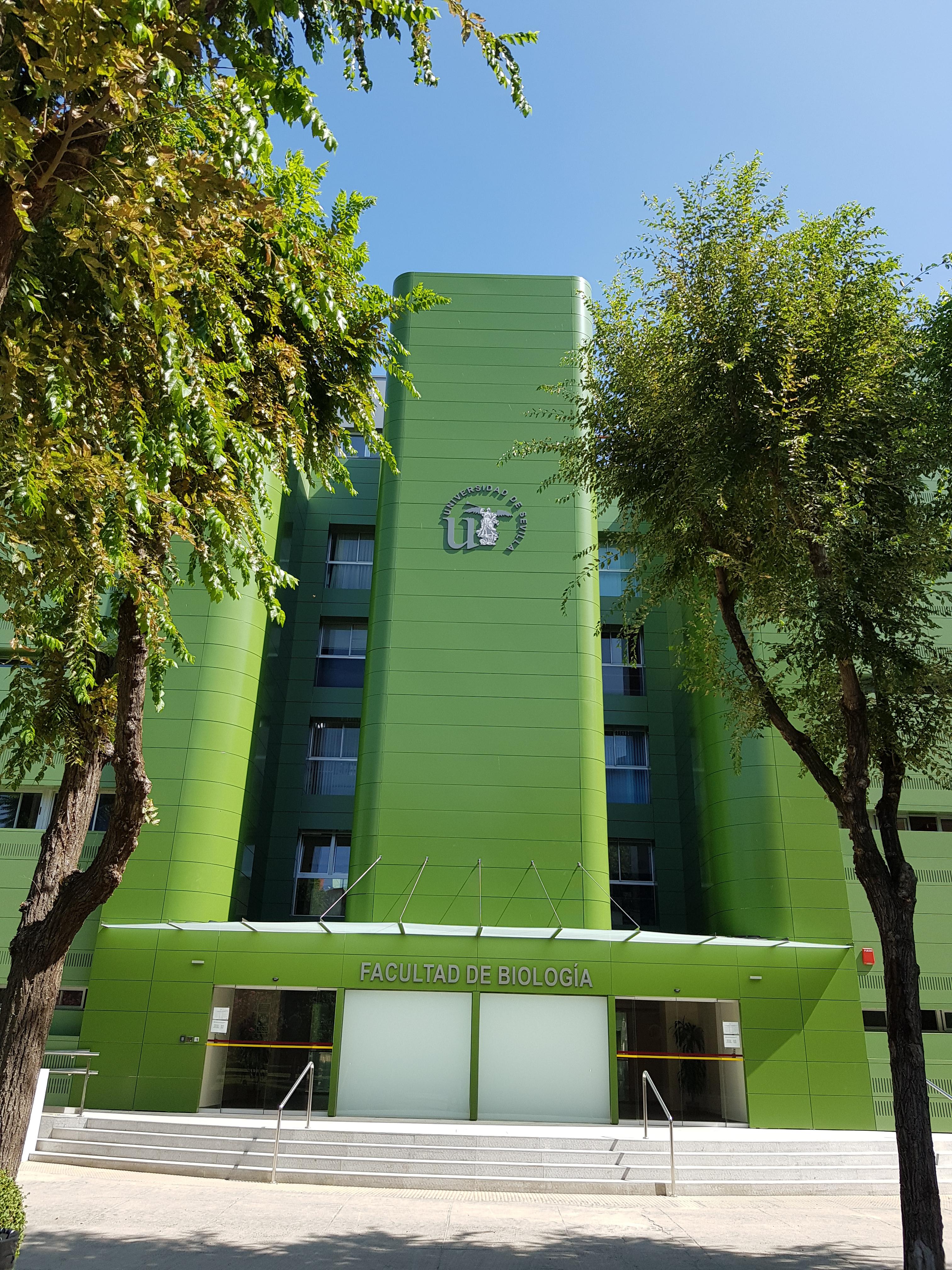 proyectos de oficinas sevilla: proyecto adeacuación y arquitectura sevilla